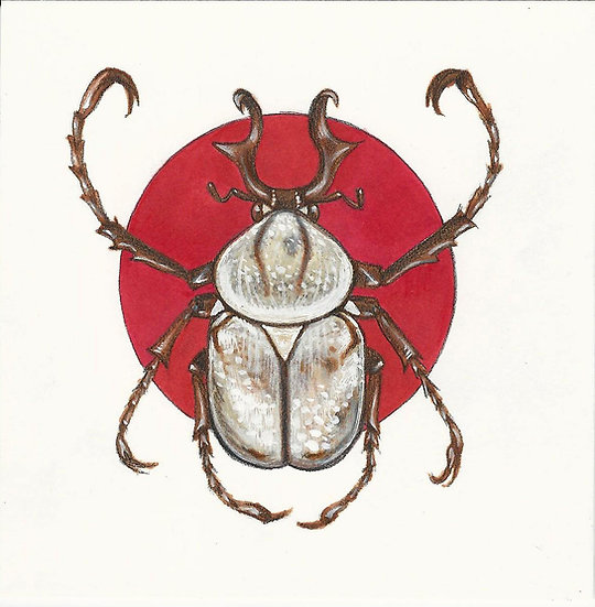 Beetle with Red Background