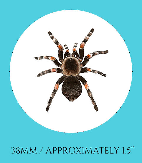 Tarantula 38mm (1.5'') Handmade Glass Dome Magnet