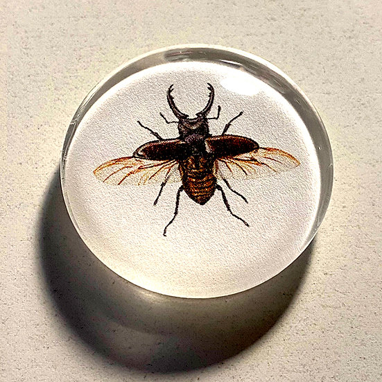 Stag Beetle 38mm (1.5'') Handmade Glass Dome Magnet