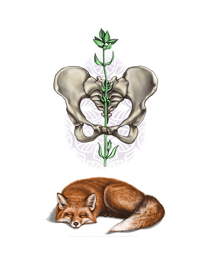 Fox with Pelvis and Thyme