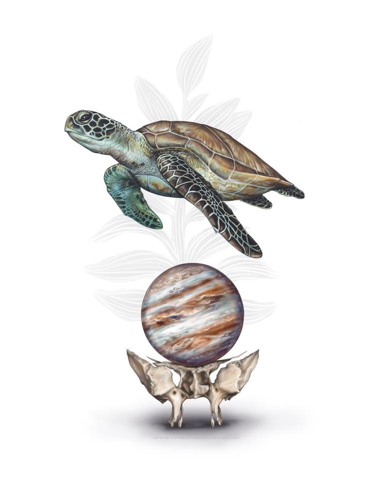 Turtle with Sphenoid and Jupiter.jpg