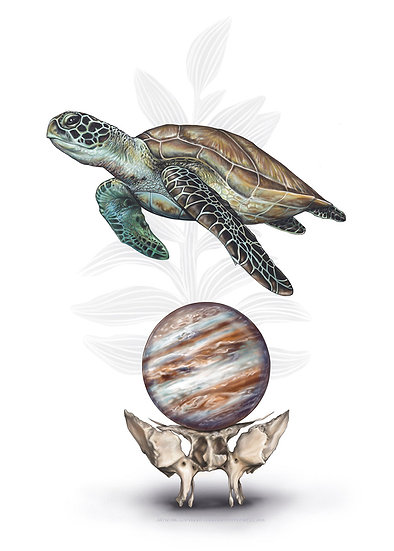 Sea Turtle with Sphenoid and Jupiter Vinyl Sticker