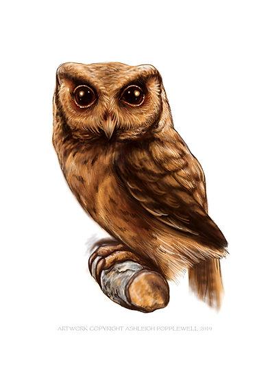 Brown Owl Vinyl Sticker