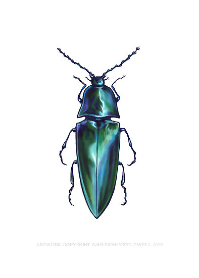 Blue Beetle Vinyl Sticker