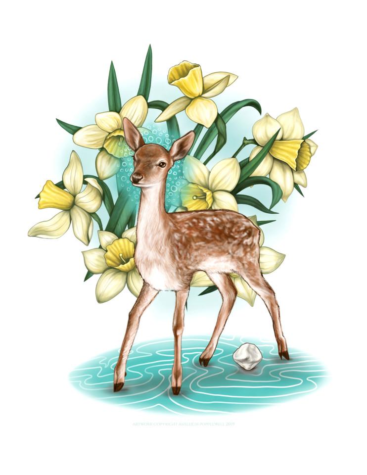 Fawn Patella Daffodils.jpg