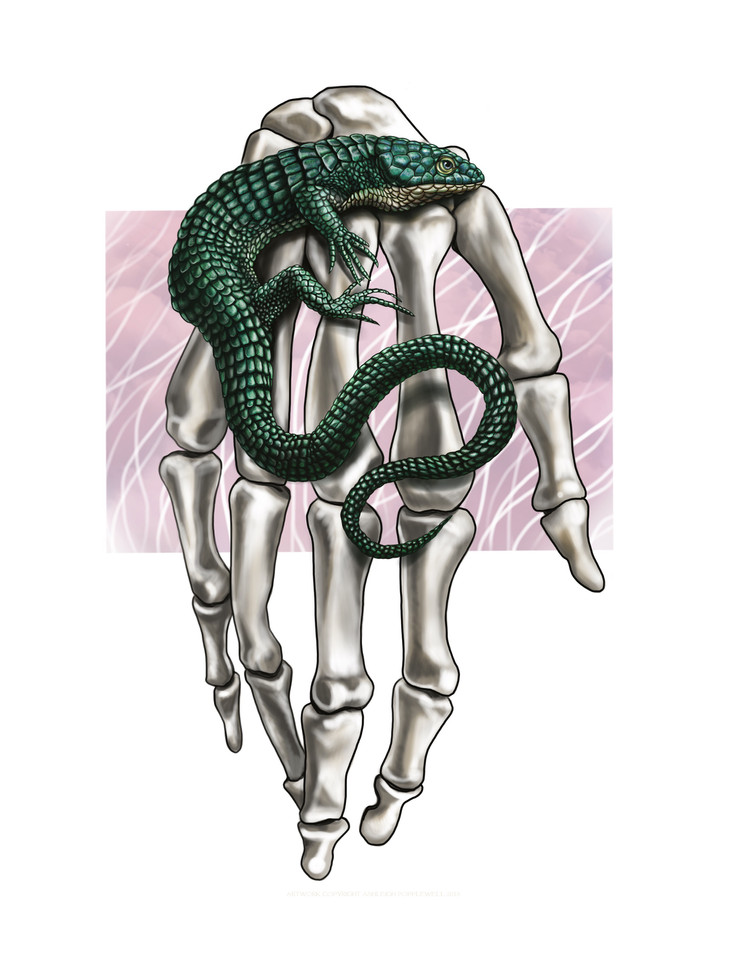 Reptile and Hand.jpg