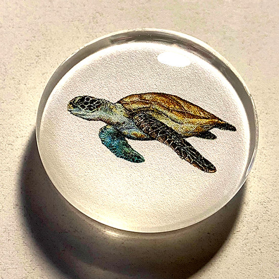 Sea Turtle 38mm (1.5'') Handmade Glass Dome Magnet