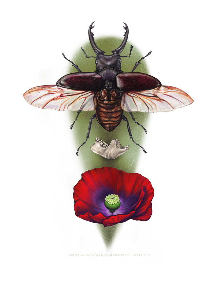 Stag Beetle and Mandible with Poppy.jpg