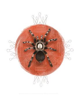 Tarantula Skull.jpg