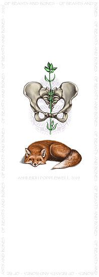 Fox with Pelvis and Thyme Bookmark