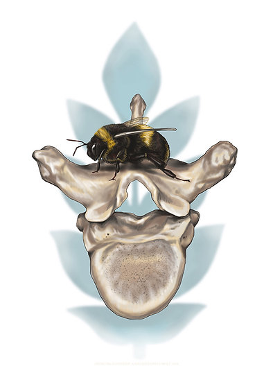 Bee and Vertebrae Vinyl Sticker