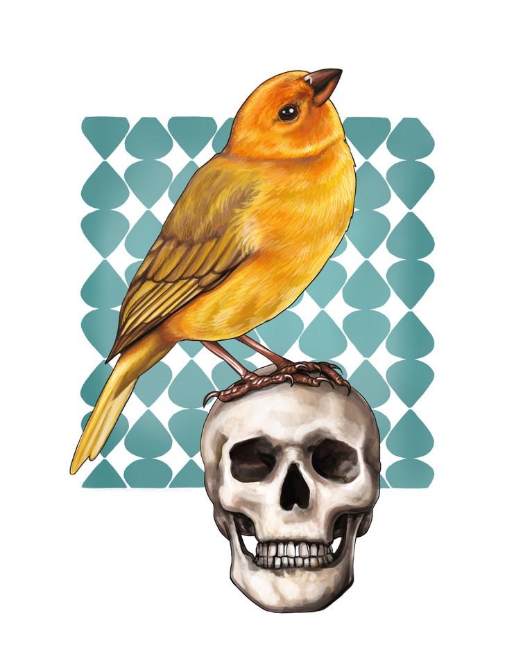 Bird and Skull.jpg