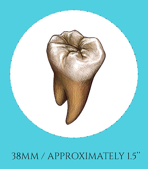Tooth 38mm (1.5'') Handmade Glass Dome Magnet