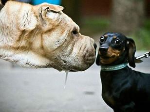 TTL 1: Canine Communication Part 4