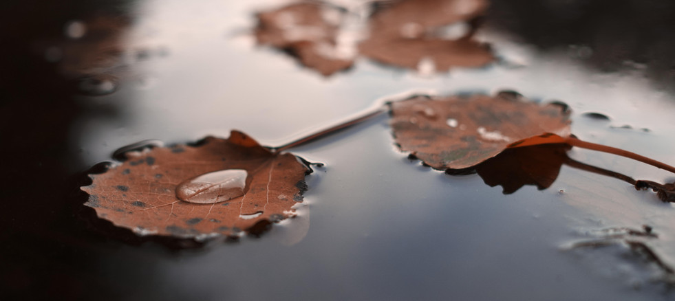 Herbst-Blätter-Foto.jpg