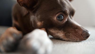 Hundeshooting2.jpg