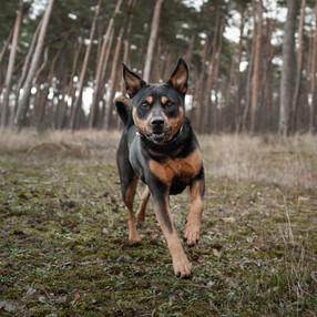 Hundeshooting3.jpg