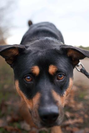 Hundeshooting-Nürnberg.jpg