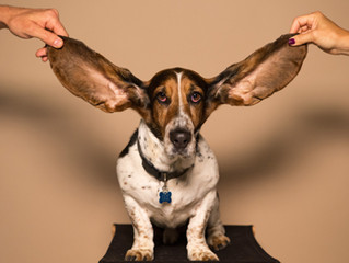 Why Ears are COOL!