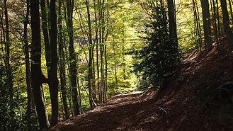 forest-820049_1920.jpg