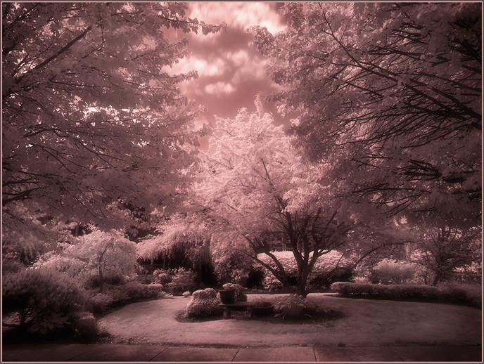 Magic Garden By Bonita Palma