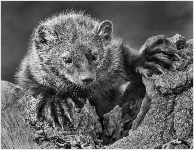 Fisher By Janet Schleeter Award Large Mono A
