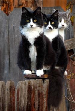 Feral Siblings
