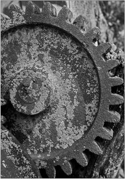 Lichen and Rust