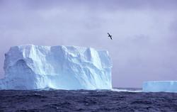 Berg and Bird, Scotia Sea