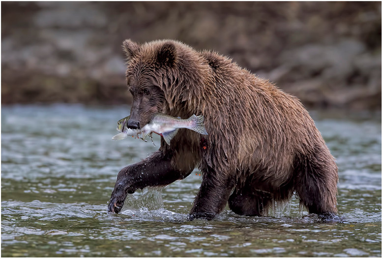 Salmon on the Menu