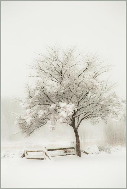 Snow Lonely