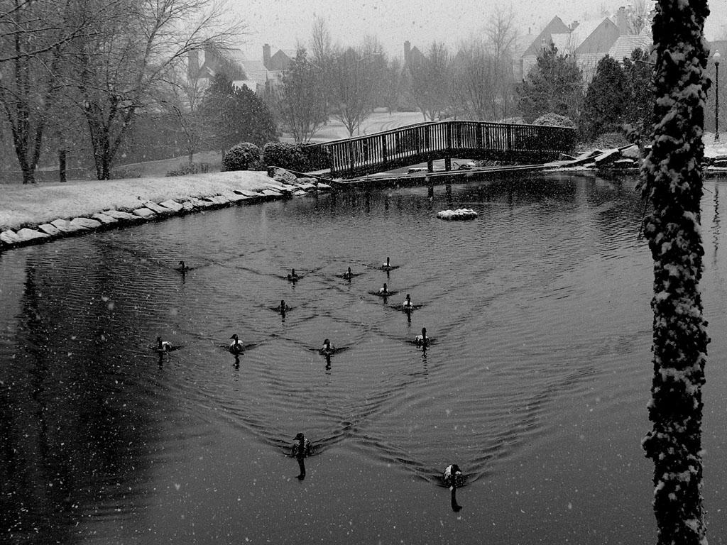 Snowy Advance