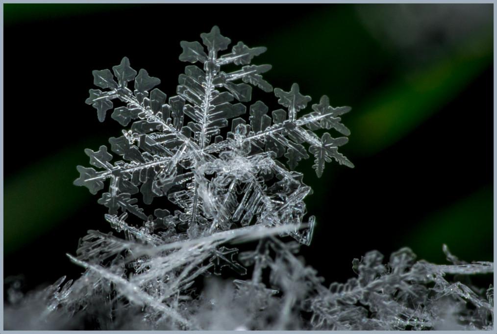 Standing Snowflake