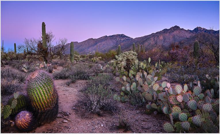 Pre-Dawn Sonoran Desert