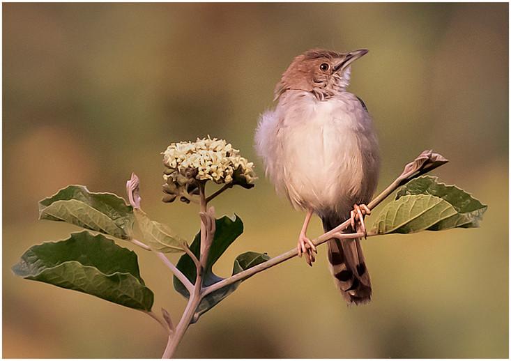 Little Brown Bird By Janet Schleeter, BOS Class AA