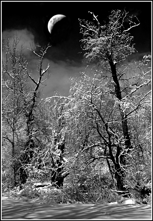 Evening Woods Walk