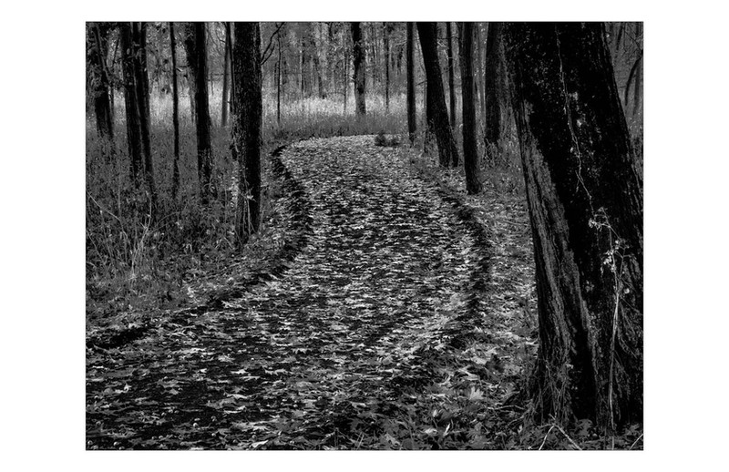 Following The Path By Pamela Myers, HM Large Mono B