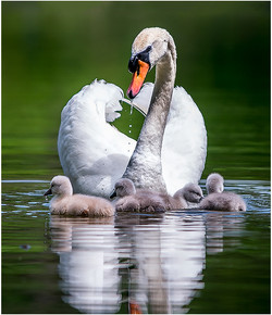Babies and Mama