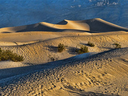 Sleeping Dune at Dawn