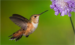 Searching for Nectar