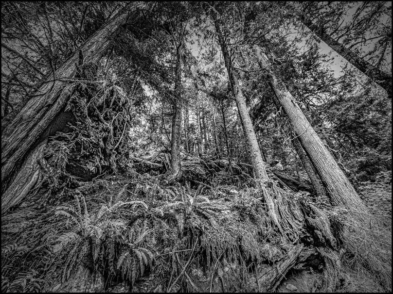BOS_Jan Ivaska_Freaky Forest_B.jpg