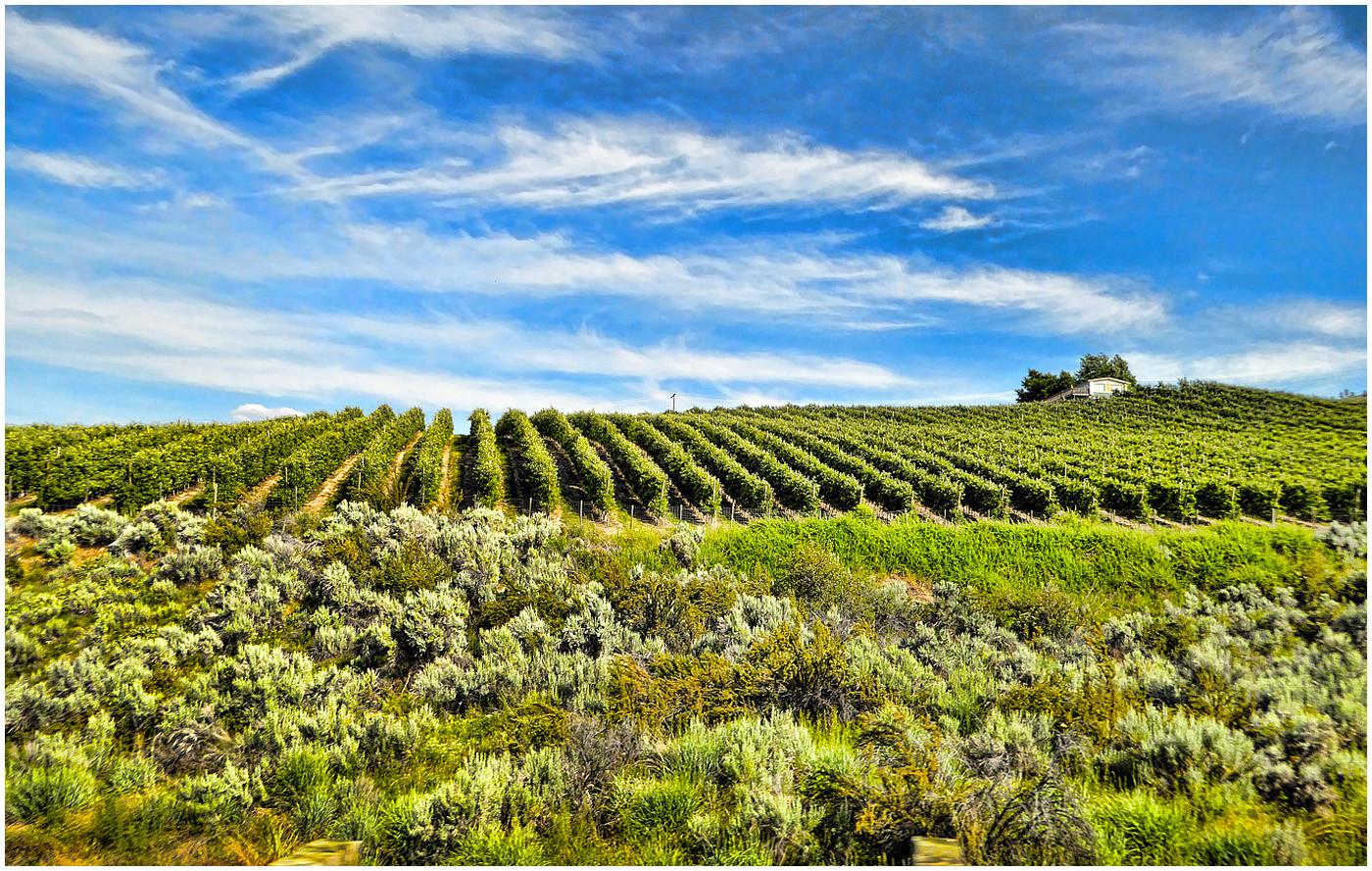 Vineyards in Washington