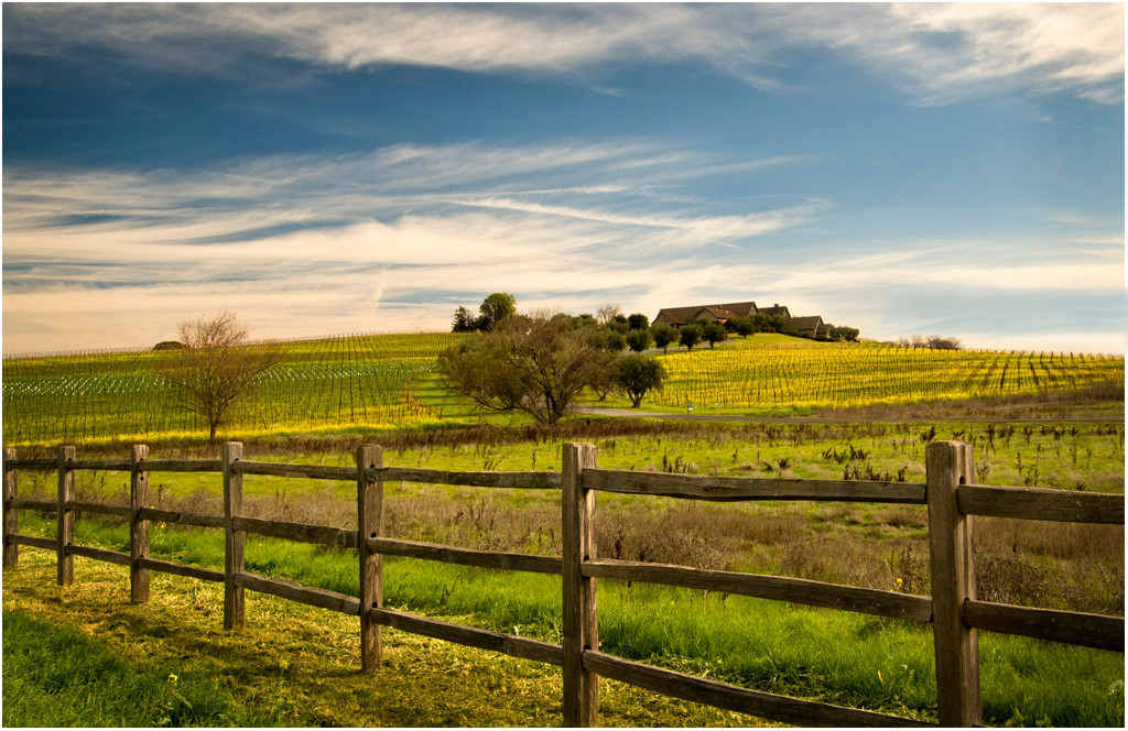 Spring Morning in Wine Country