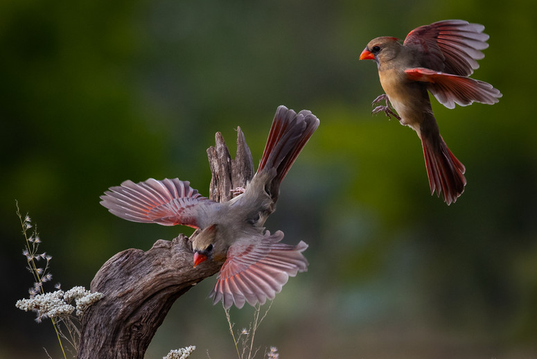 Sharing the Perch By Chuck Guedelhoefer Award and POM Small Color A