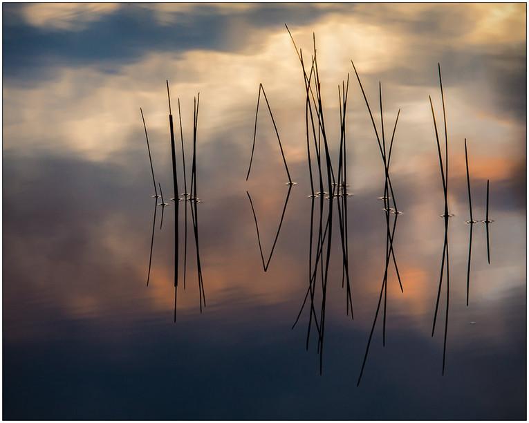 Bog Light Zen
