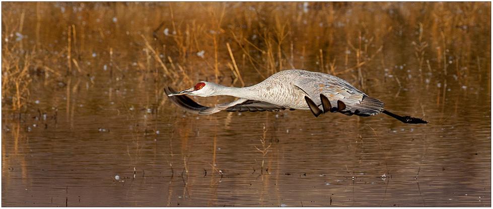 Low Flying Crane