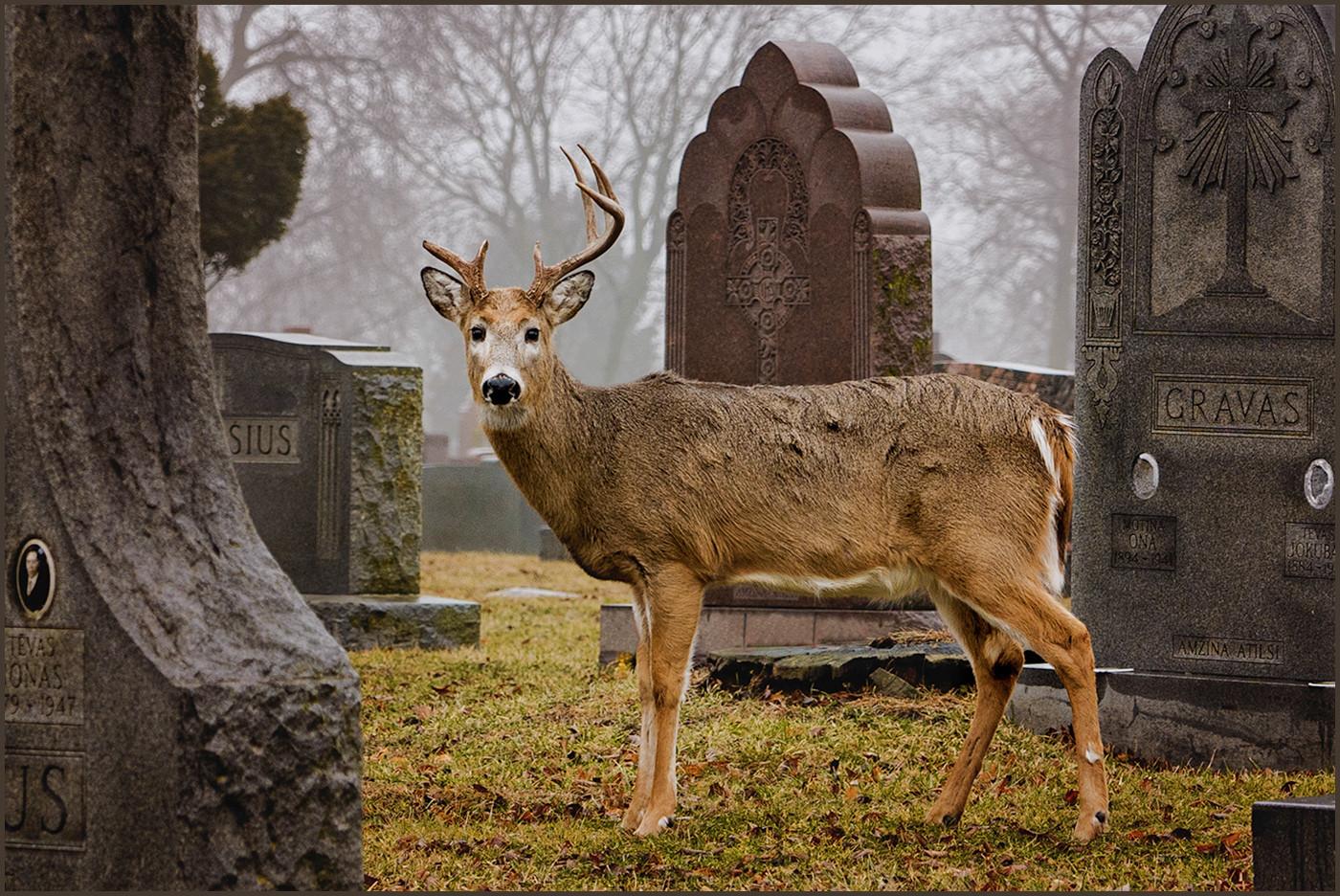 Oh Deer!  By Lynette See Award Class B