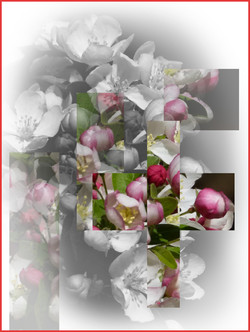 Floral Disarray