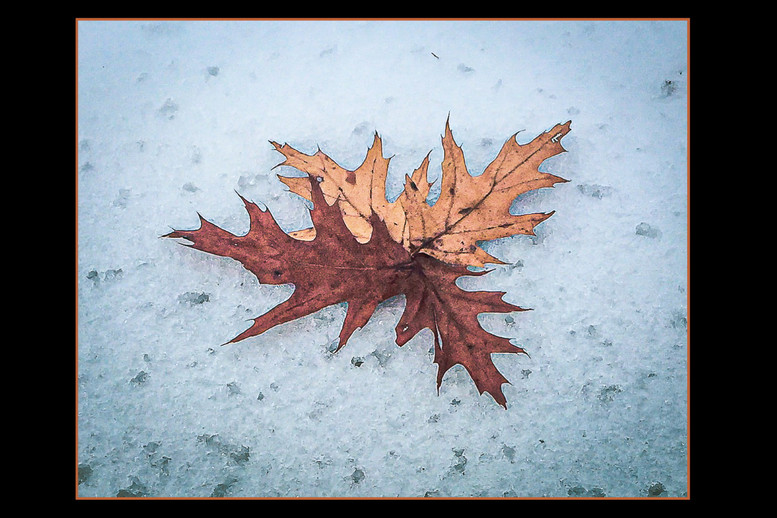 Leafy Snow By Pam Myers, Award Class A