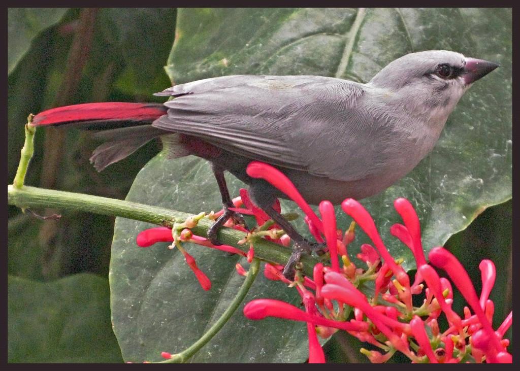 Birdy-Birdy
